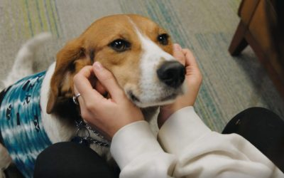 9/24 – Beyond Pets: Emotional Support Animals and Service Animals